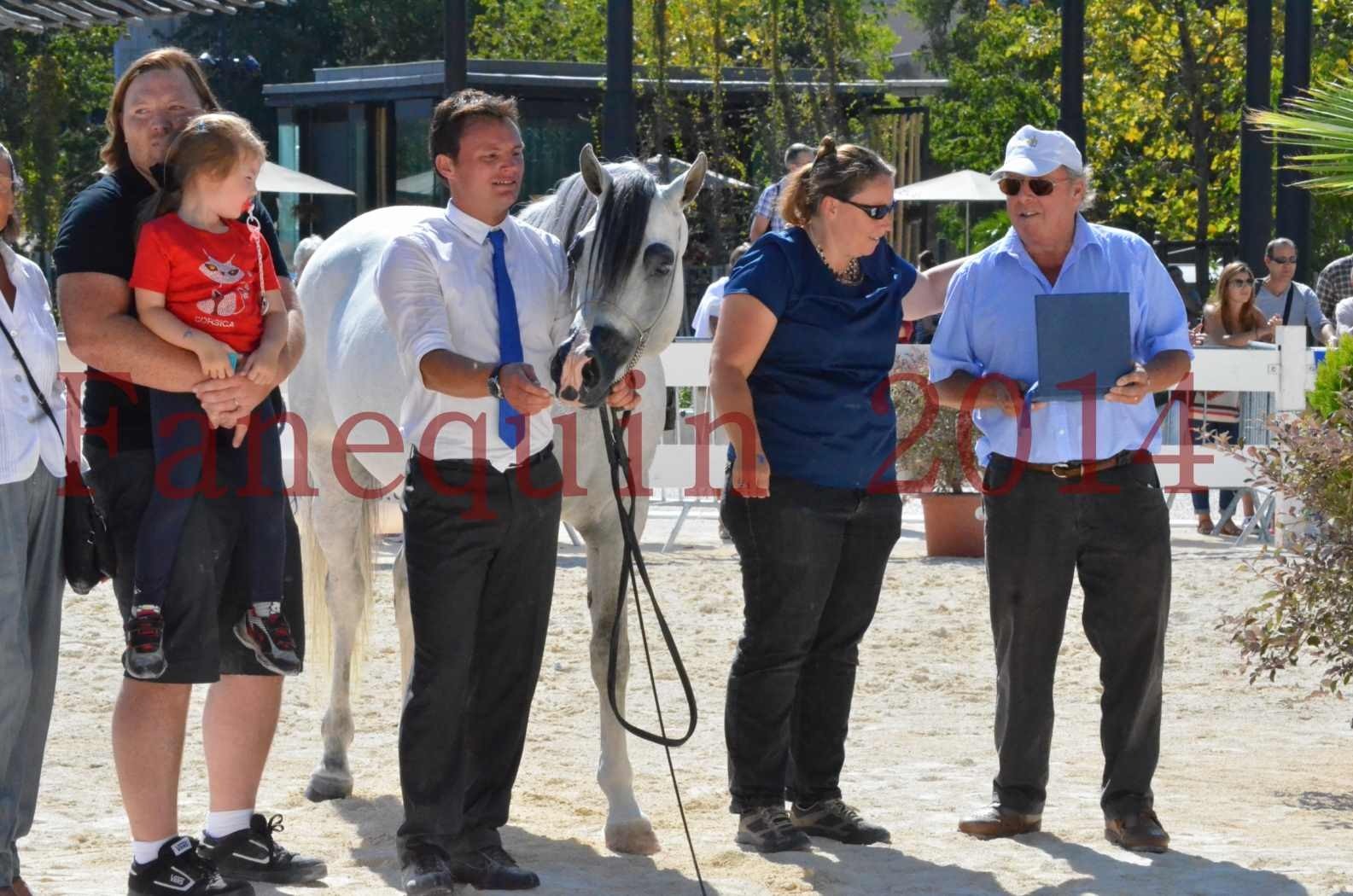 Concours National de Nîmes de chevaux ARABES 2014 - Sélection - SHAOLIN DE NEDJAIA - 88