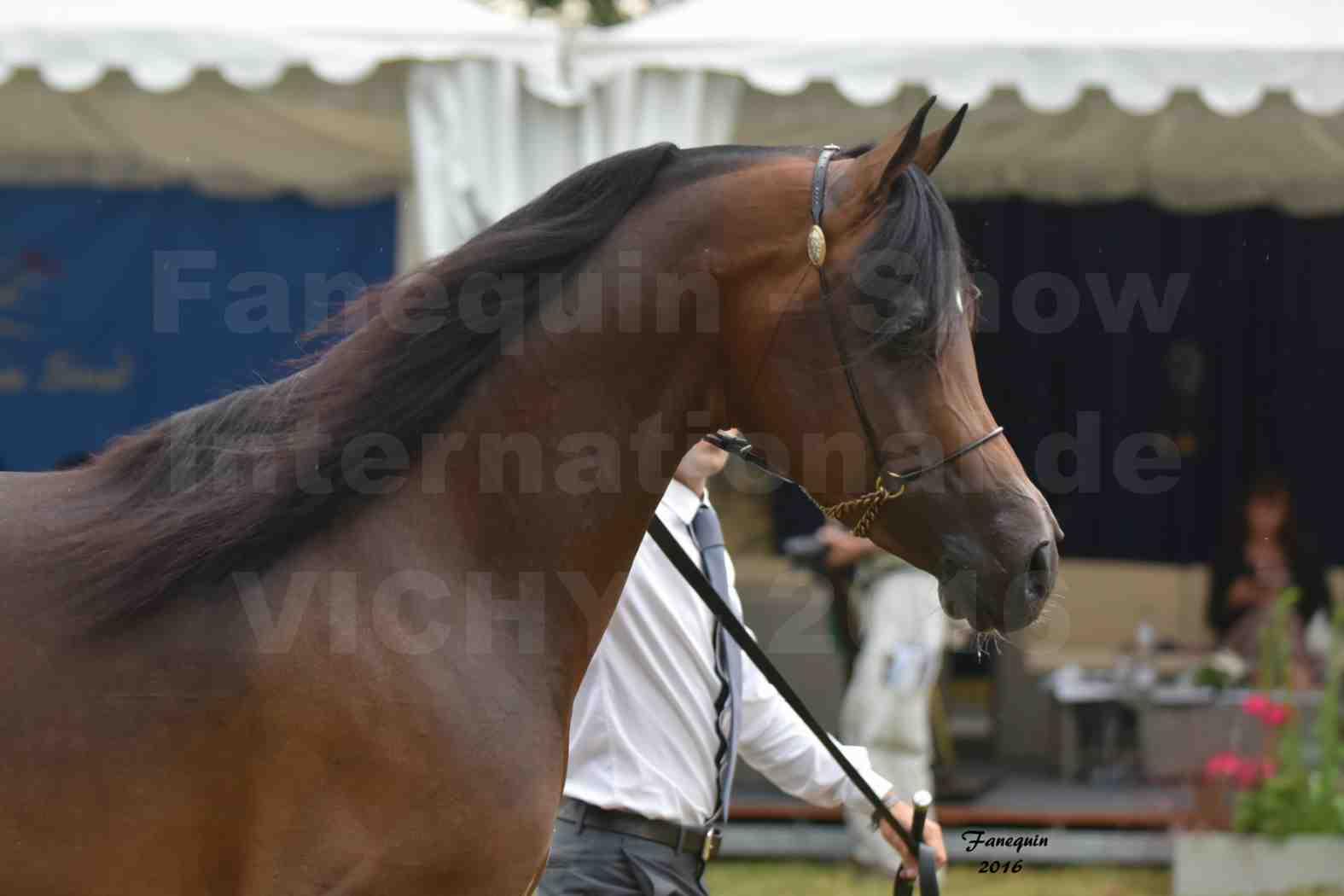 International Arabian Horse Show B de VICHY 2016 - MILLIAR - Notre Sélection - Portraits - 7