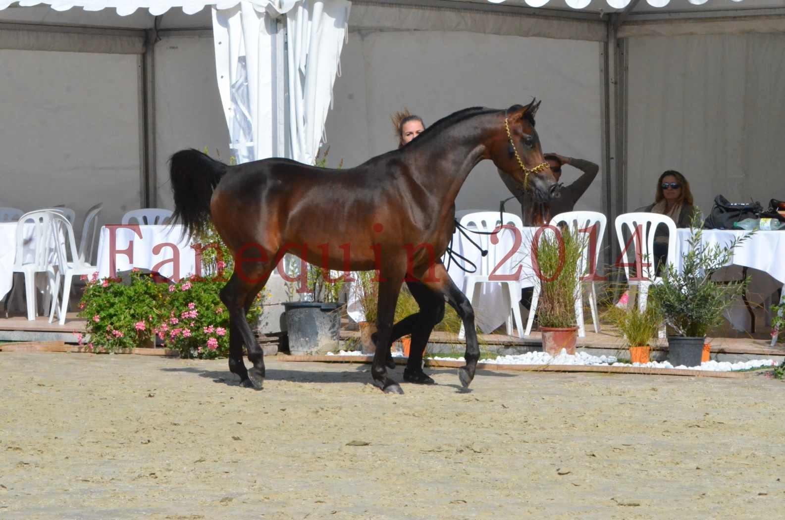 Championnat de FRANCE 2014 - Amateurs - JA KHALEB - 29