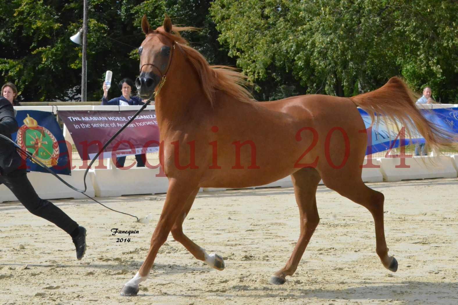 CHAMPIONNAT DE FRANCE 2014 A POMPADOUR - Notre Sélection - LUTFINAH JA - 18
