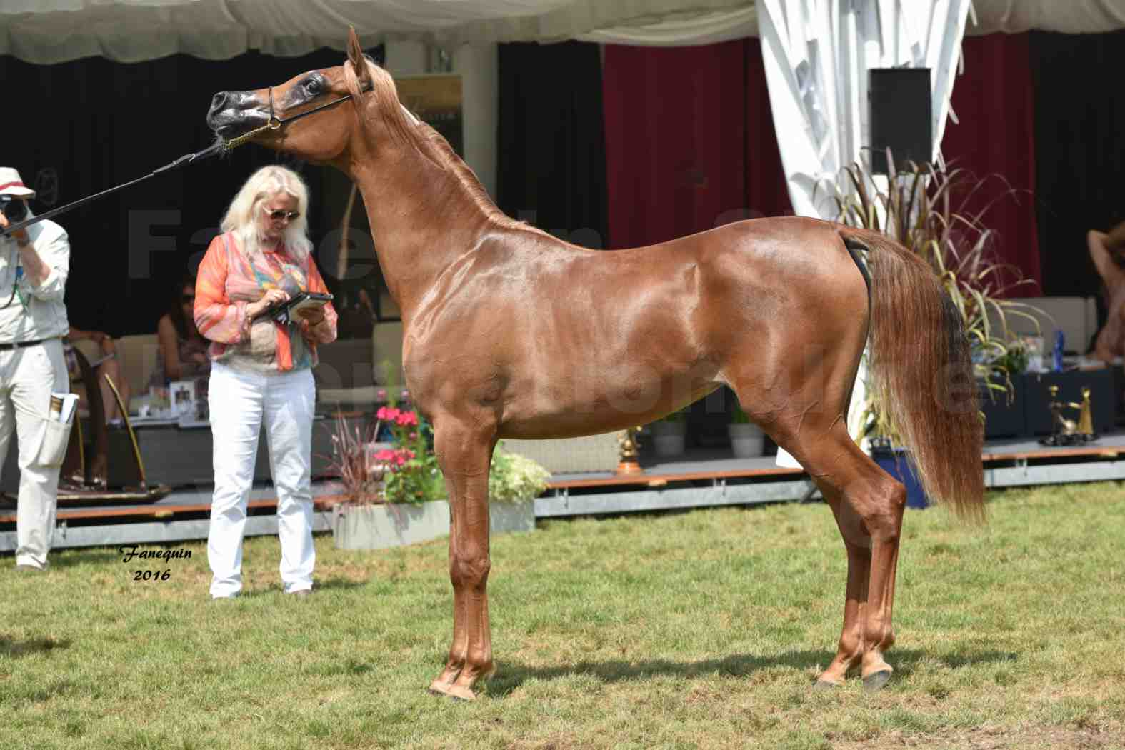 International Arabian Horse Show B de VICHY 2016 - JA FALAENE - Notre Sélection - 10