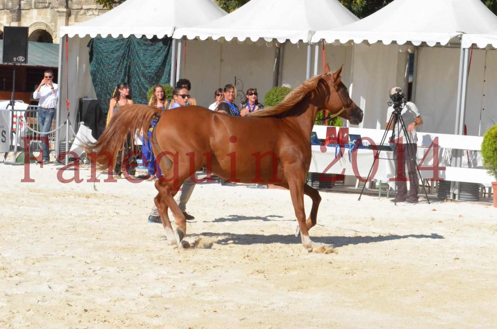 Concours National de Nîmes de chevaux ARABES 2014 - Championnat - MASSAI DE BARREL - 51