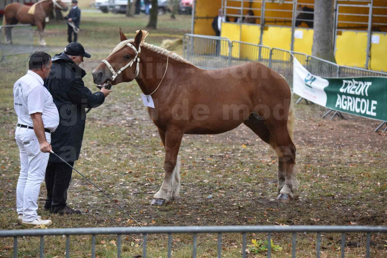 Concours Régional de chevaux de traits en 2017 - Trait COMTOIS - FANNY 61 - 03