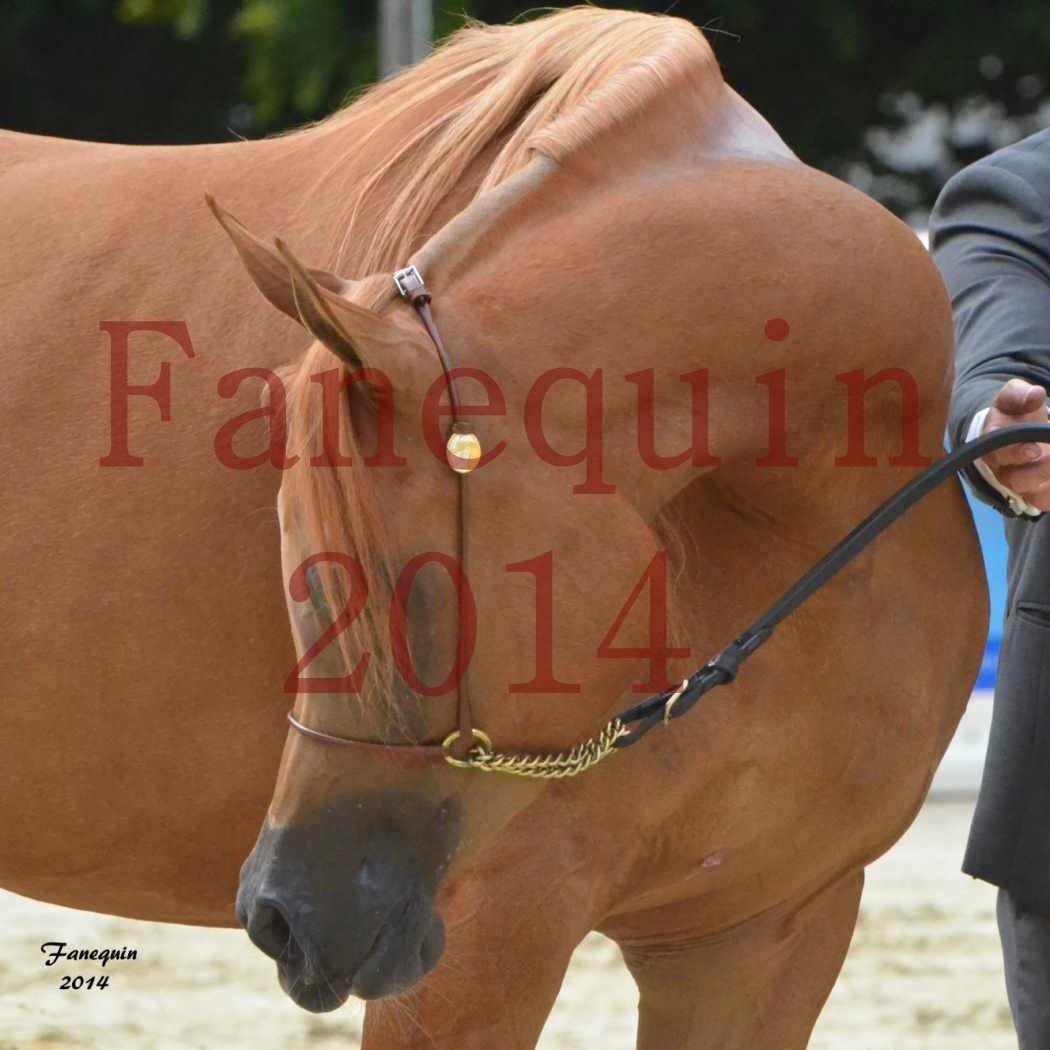 CHAMPIONNAT DE FRANCE 2014 A POMPADOUR - Notre Sélection - Portraits - LUTFINAH JA - 06