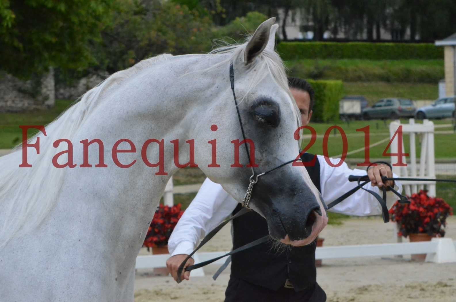 CHAMPIONNAT DE FRANCE 2014 A POMPADOUR - Sélection - FA STARLIGHT - 02