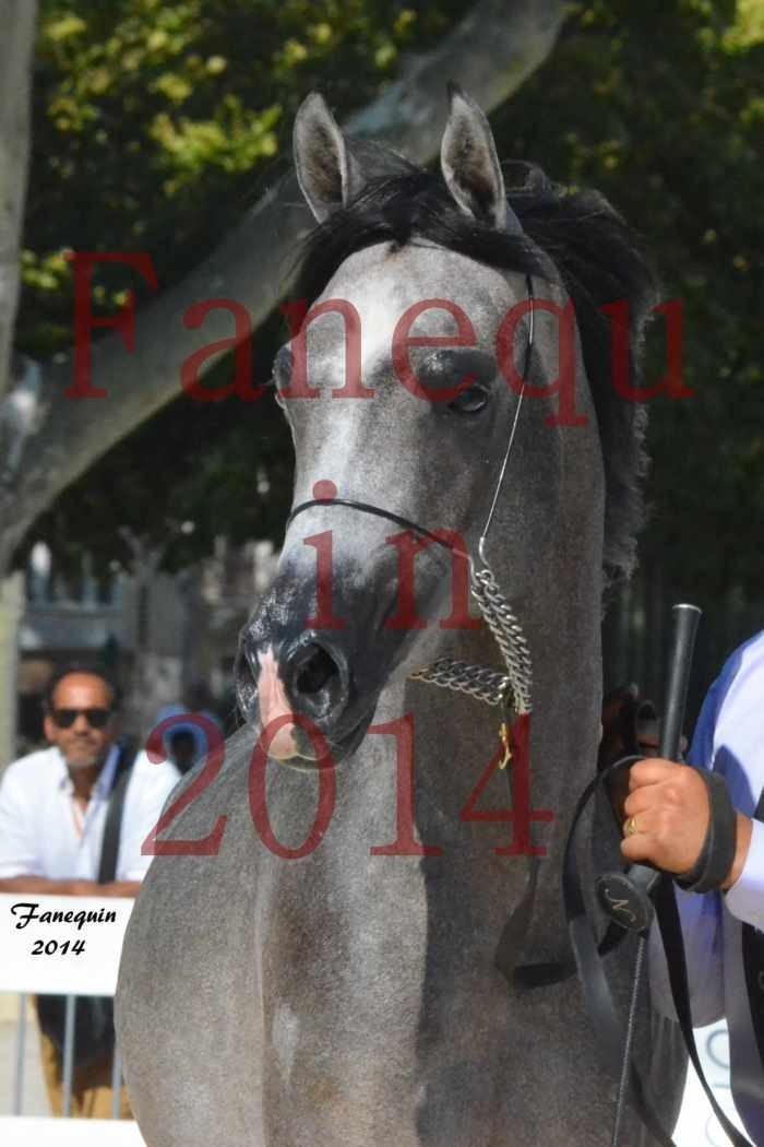 Concours National de Nîmes de chevaux ARABES 2014 - Notre Sélection - Portraits - JOSEPH'S BOUZIOLS - 09