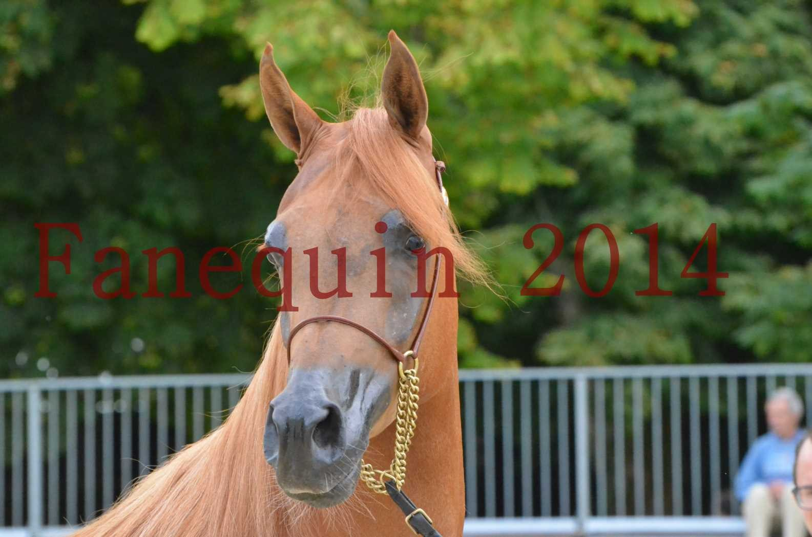 CHAMPIONNAT DE FRANCE 2014 A POMPADOUR - Sélection - LUTFINAH JA - 02
