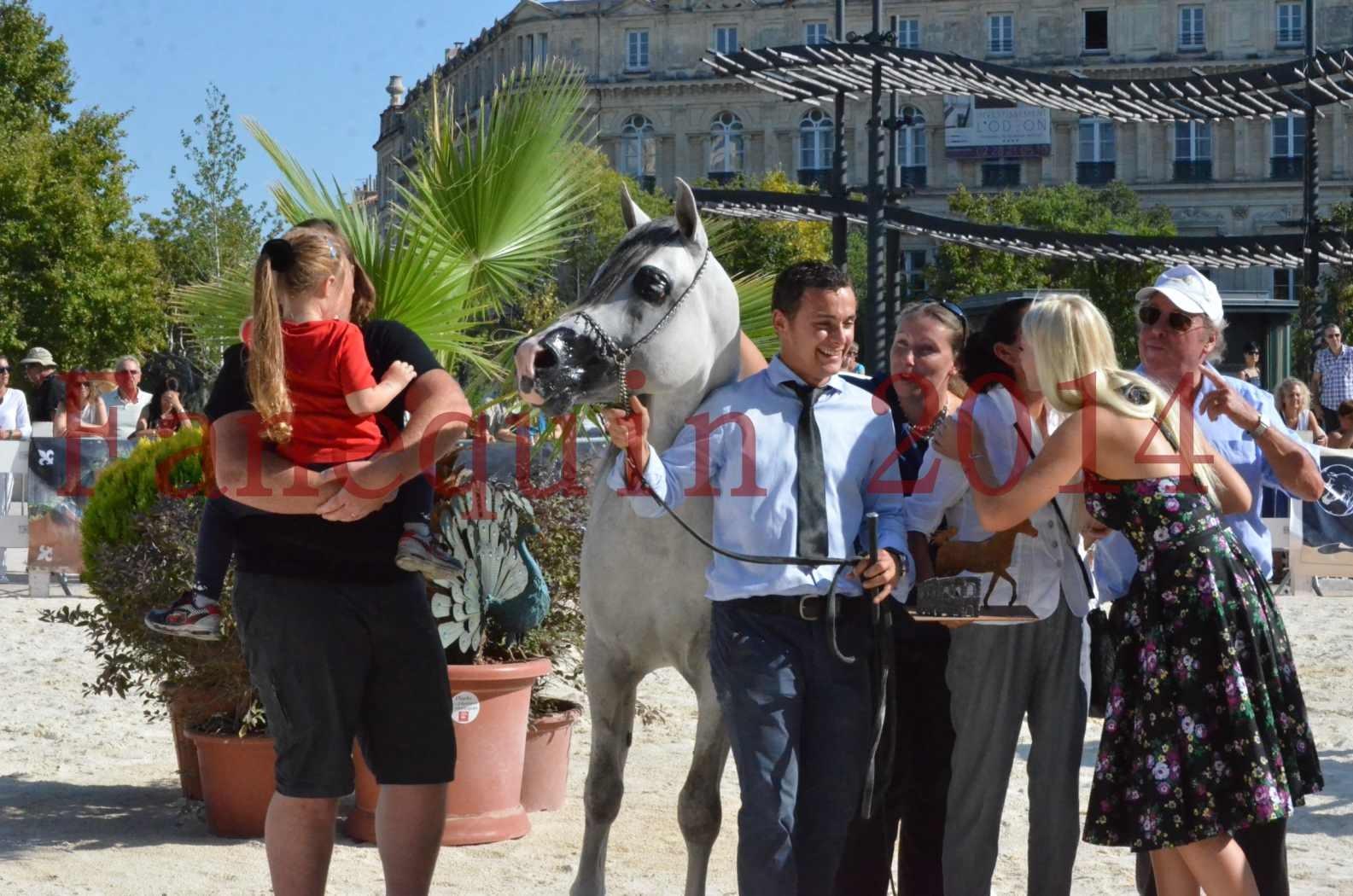 Concours National de Nîmes de chevaux ARABES 2014 - Championnat - SHAOLIN DE NEDJAIA - 49