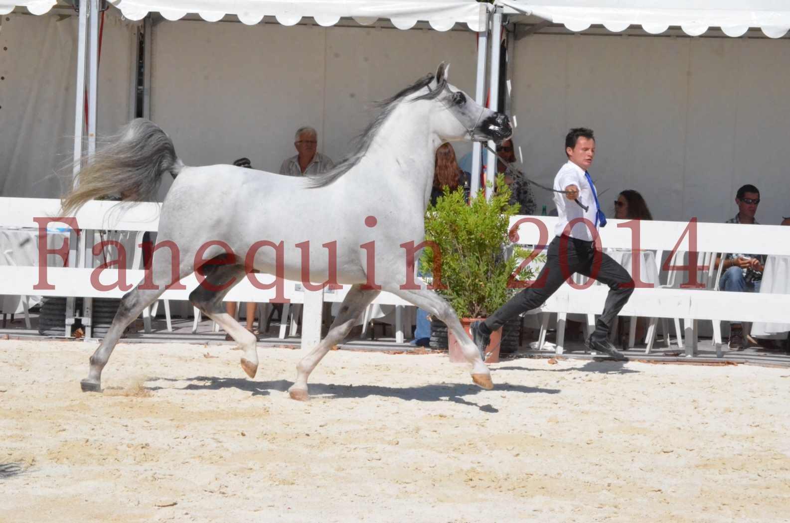 Concours National de Nîmes de chevaux ARABES 2014 - Sélection - SHAOLIN DE NEDJAIA - 04