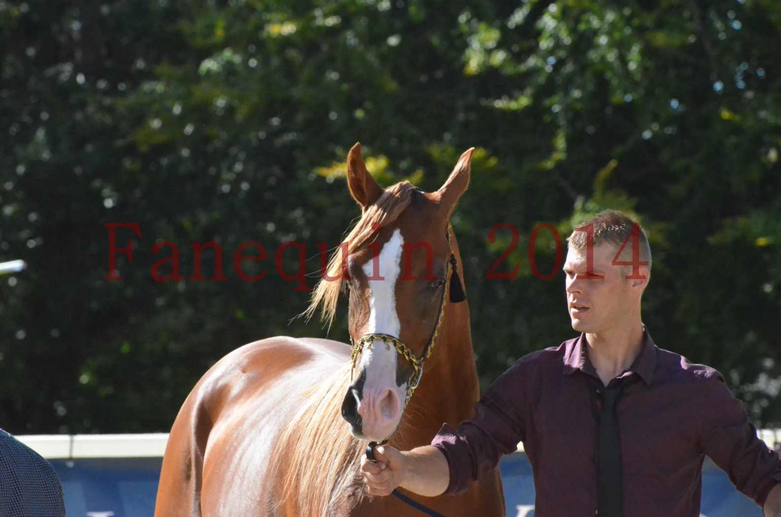 Championnat de FRANCE 2014 - Amateurs - SELECTO IBN SAMAWI - 082