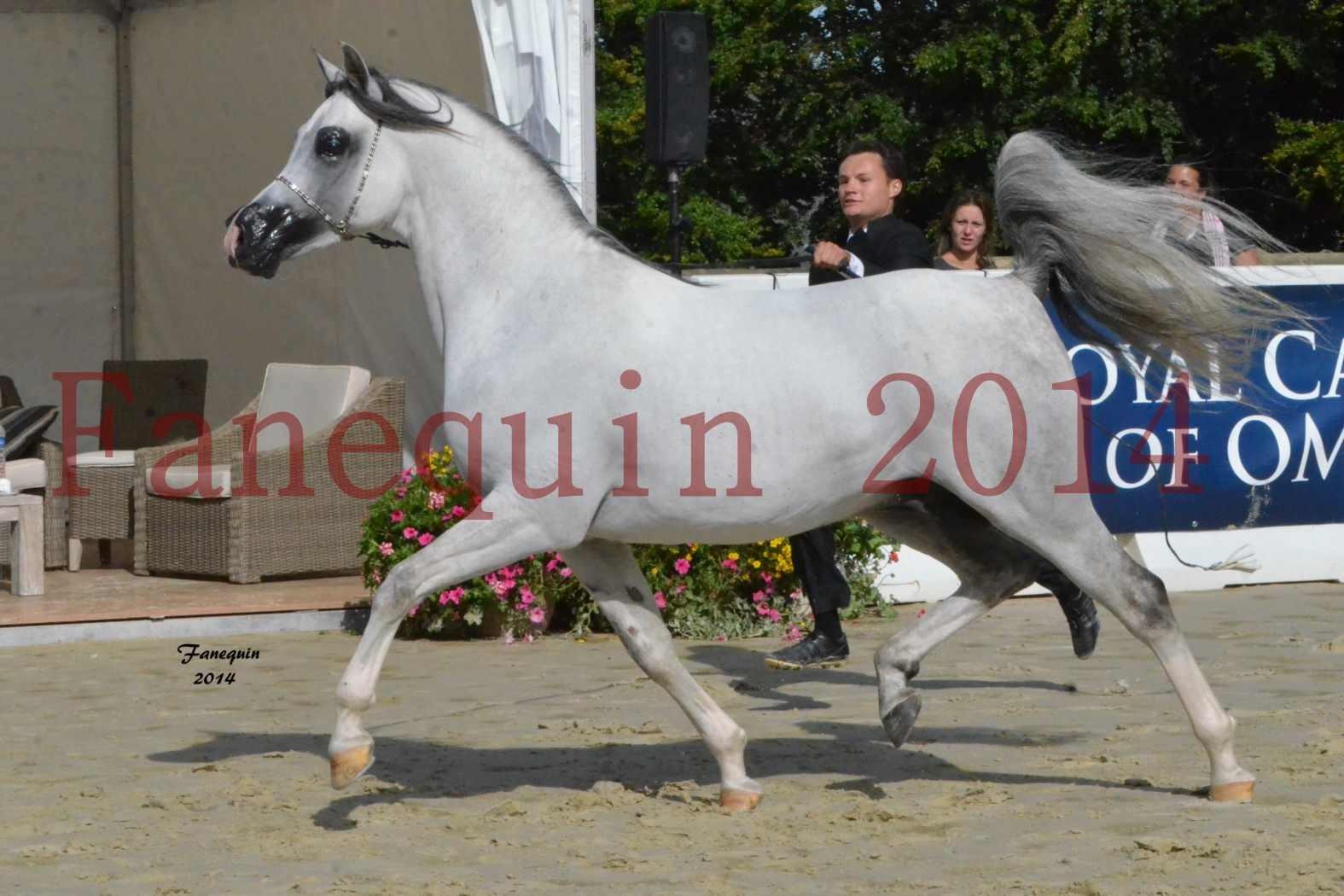 CHAMPIONNAT DE FRANCE  2014 A POMPADOUR - Notre Sélection - SHAOLIN DE NEDJAIA - 08