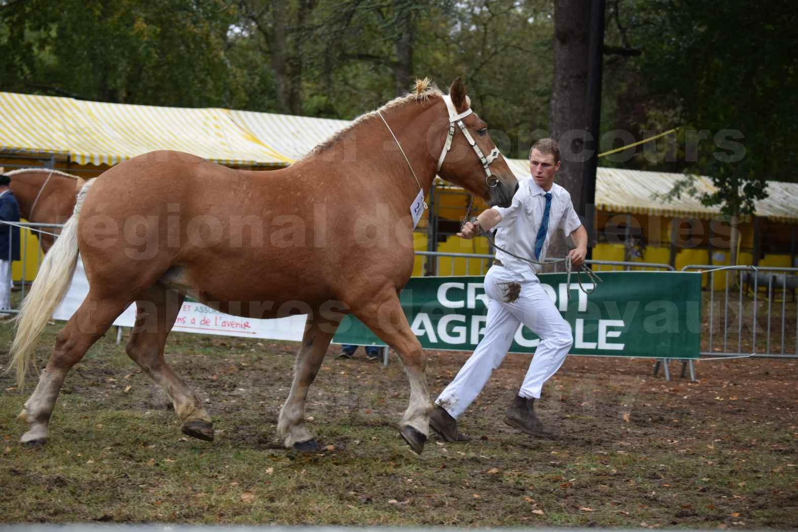Concours Régional de chevaux de traits en 2017 - Pouliche Trait COMTOIS - EGLANTINE 28 - 18