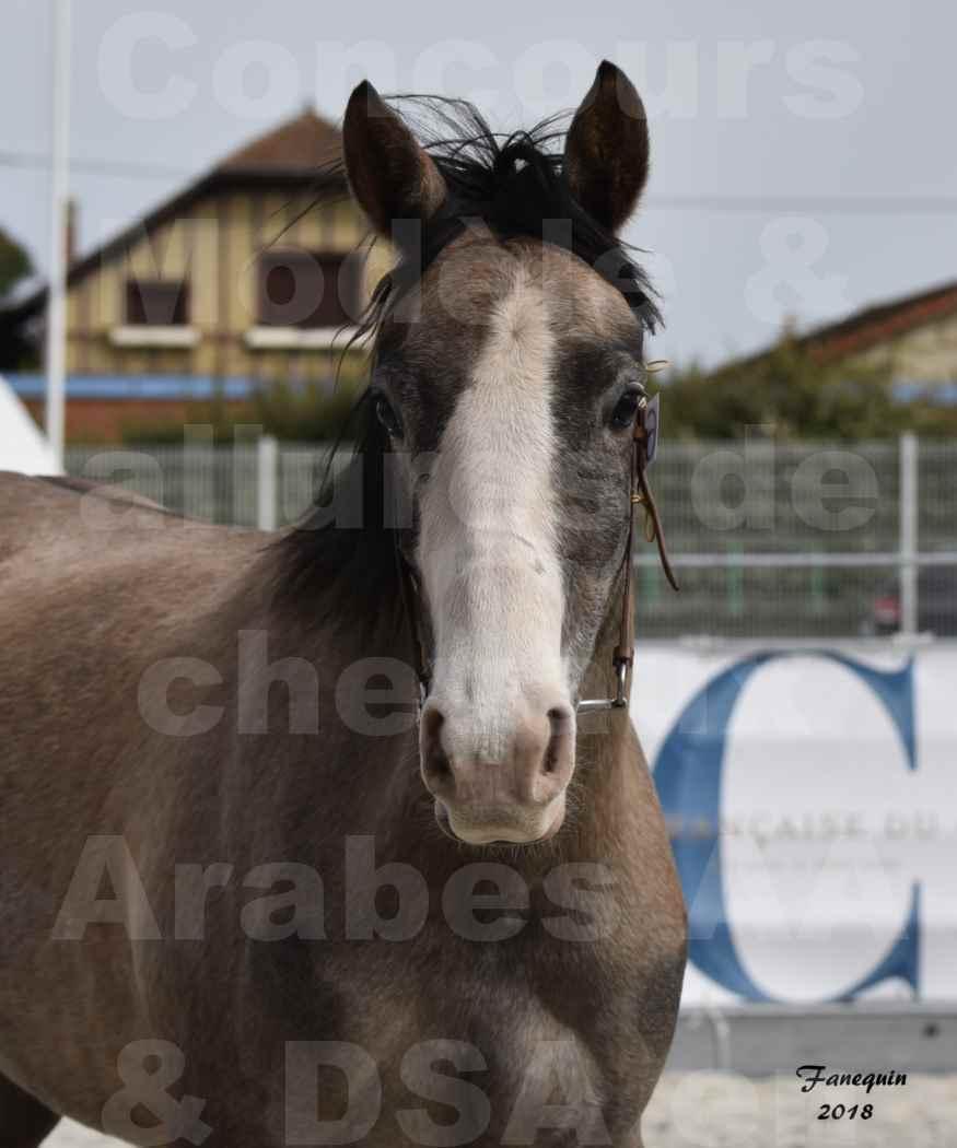Concours d'élevage de Chevaux Arabes - Demi Sang Arabes - Anglo Arabes - ALBI les 6 & 7 Avril 2018 - FLORIA DU PUECH - Notre Sélection - Portraits - 1
