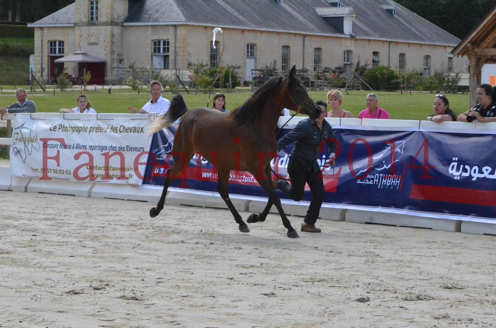 Championnat de FRANCE 2014 - Amateurs - KAL'ELLE D'ELHORIA - 02