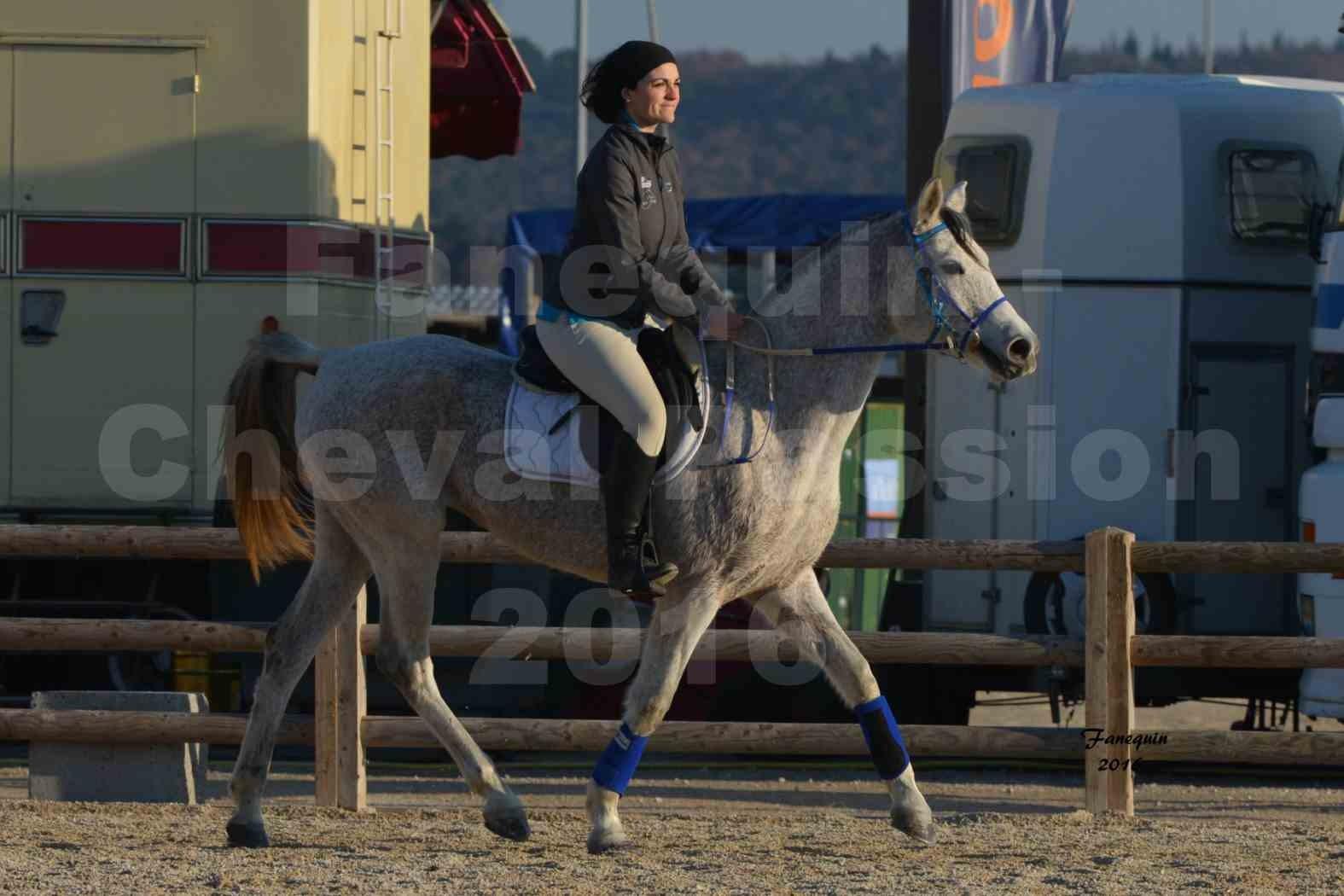 Cheval Passion 2016 - Présentation extérieure de chevaux Arabes montés - 10