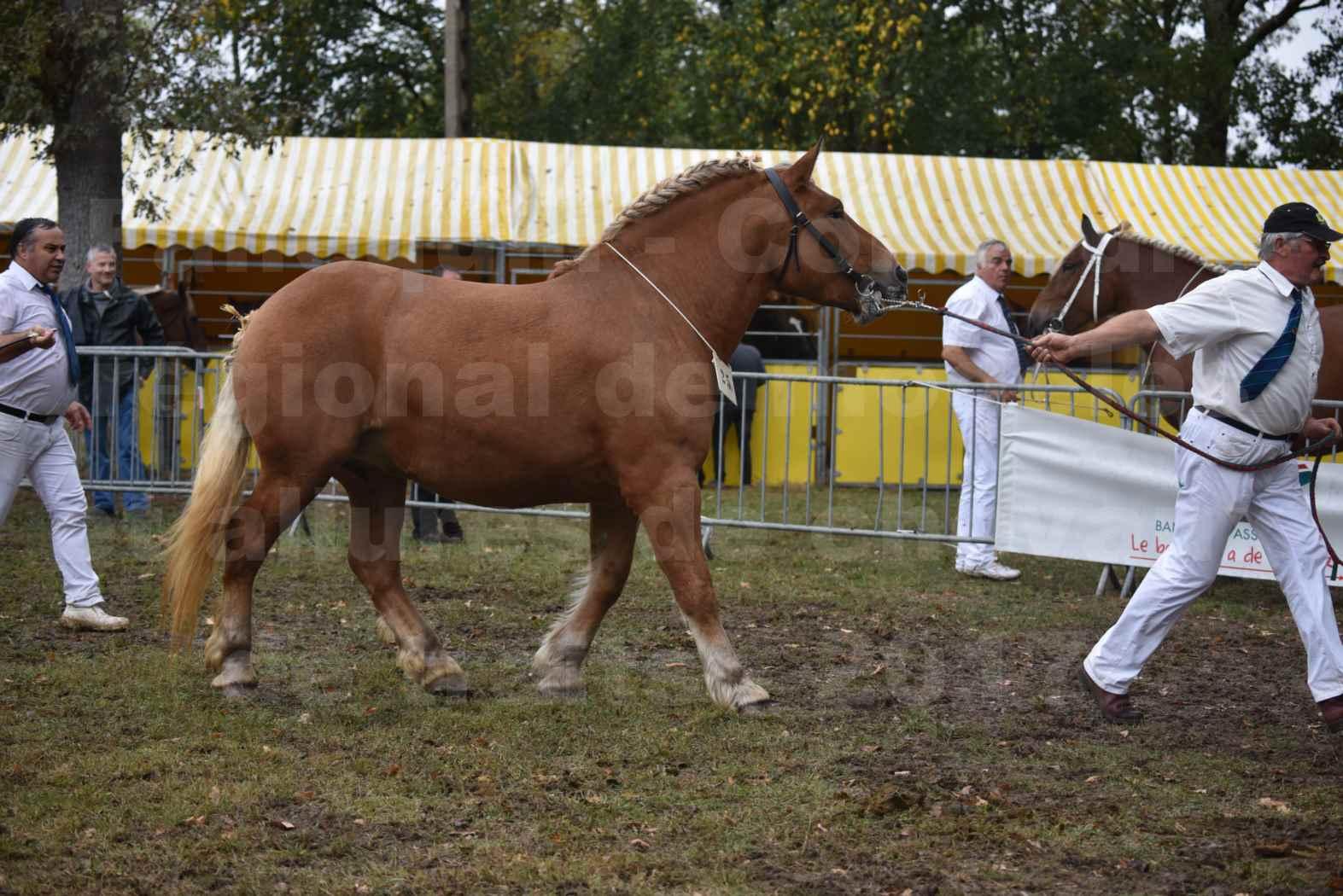 Concours Régional de chevaux de traits en 2017 - Trait COMTOIS  - EGLANTINE DE BENS - 15