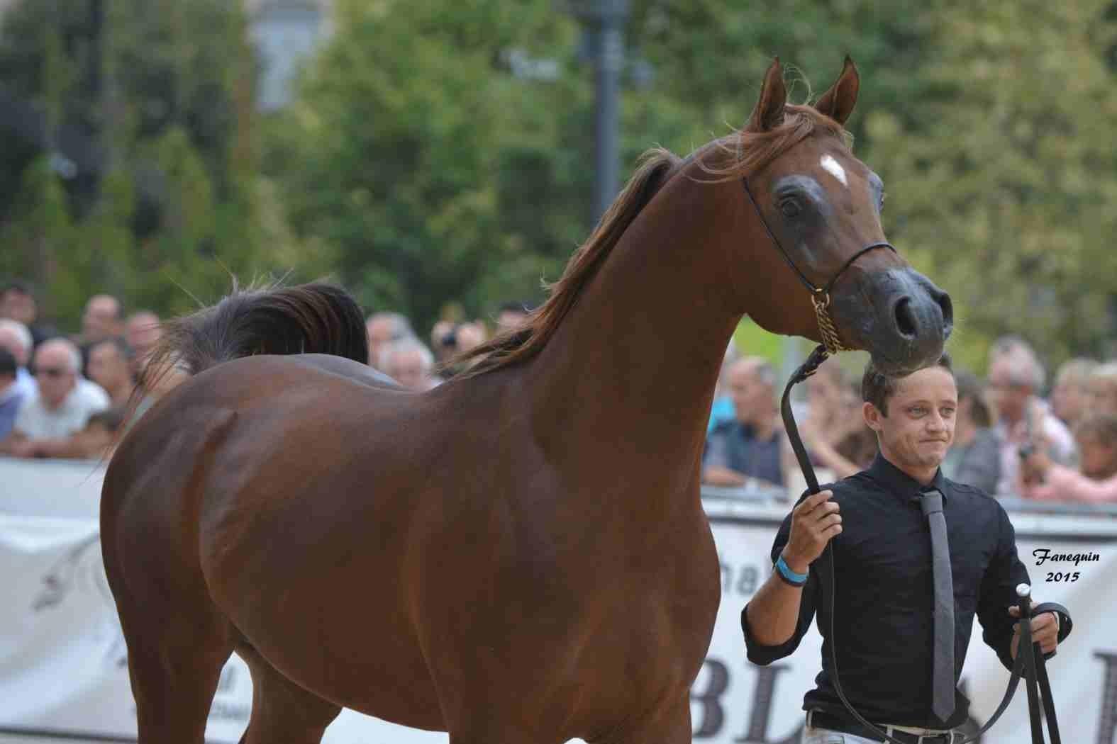 KARAM ALBIDAYER en 2015 - Concours national Nîmes prestige - notre sélection - Portraits - 1