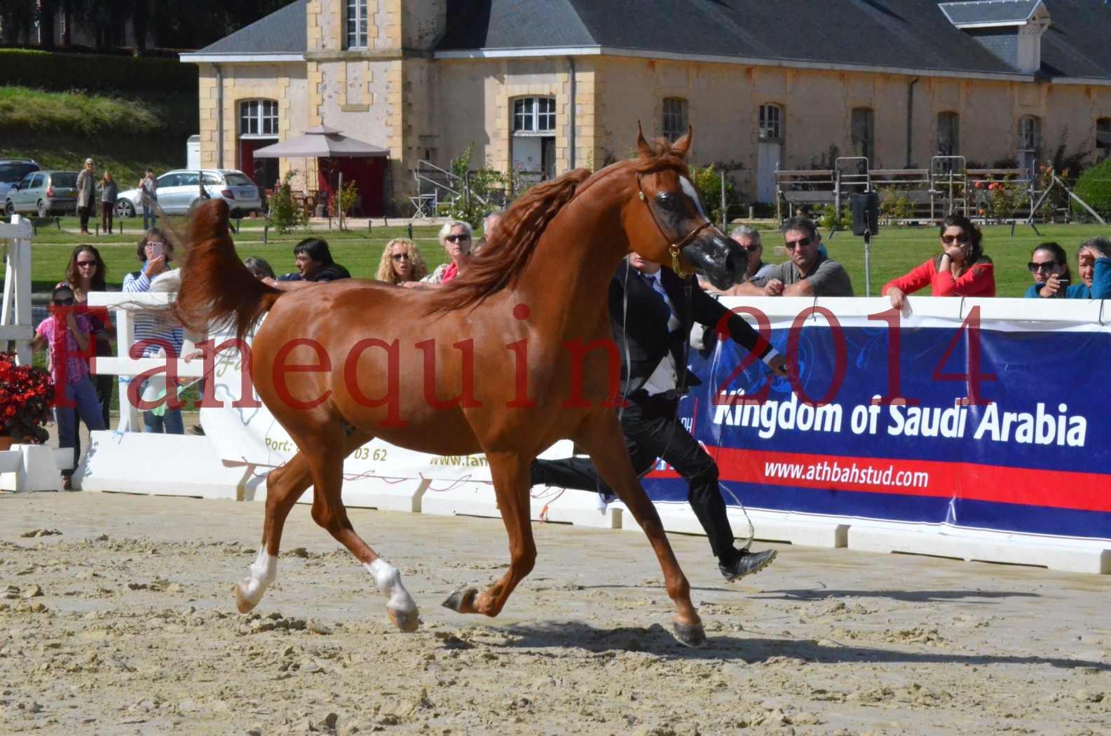 CHAMPIONNAT DE FRANCE 2014 A POMPADOUR - Sélection - KINSHASA JA - 13
