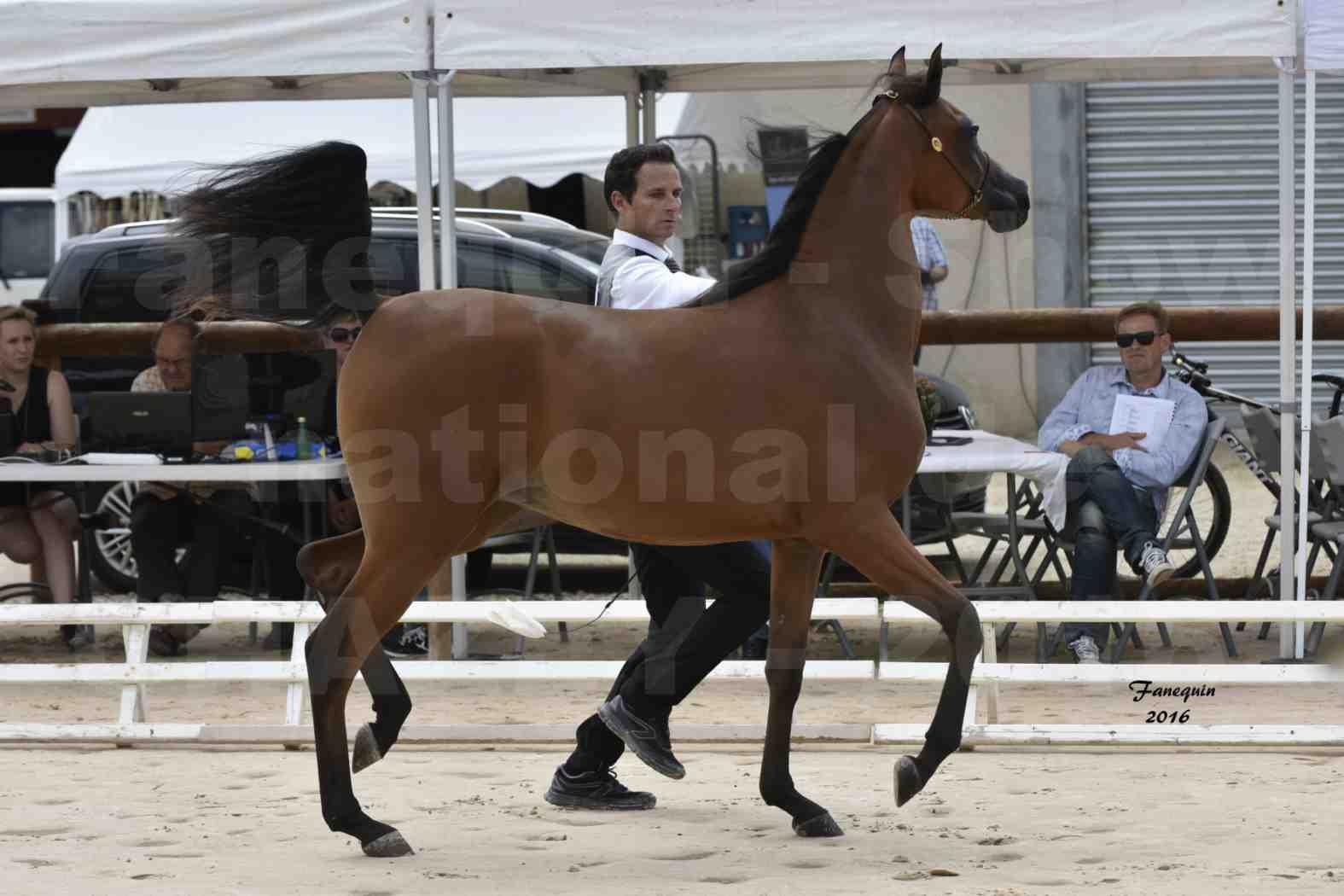 Show national de chevaux arabes de CHAZEY sur AIN - AZIZA DOMITIA - 1