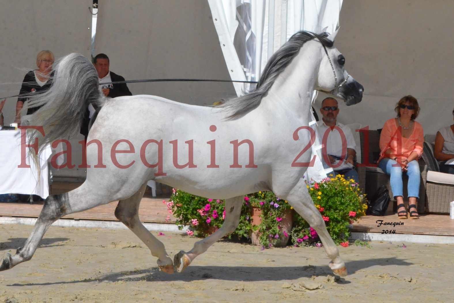 CHAMPIONNAT DE FRANCE  2014 A POMPADOUR - Notre Sélection - SHAOLIN DE NEDJAIA - 15
