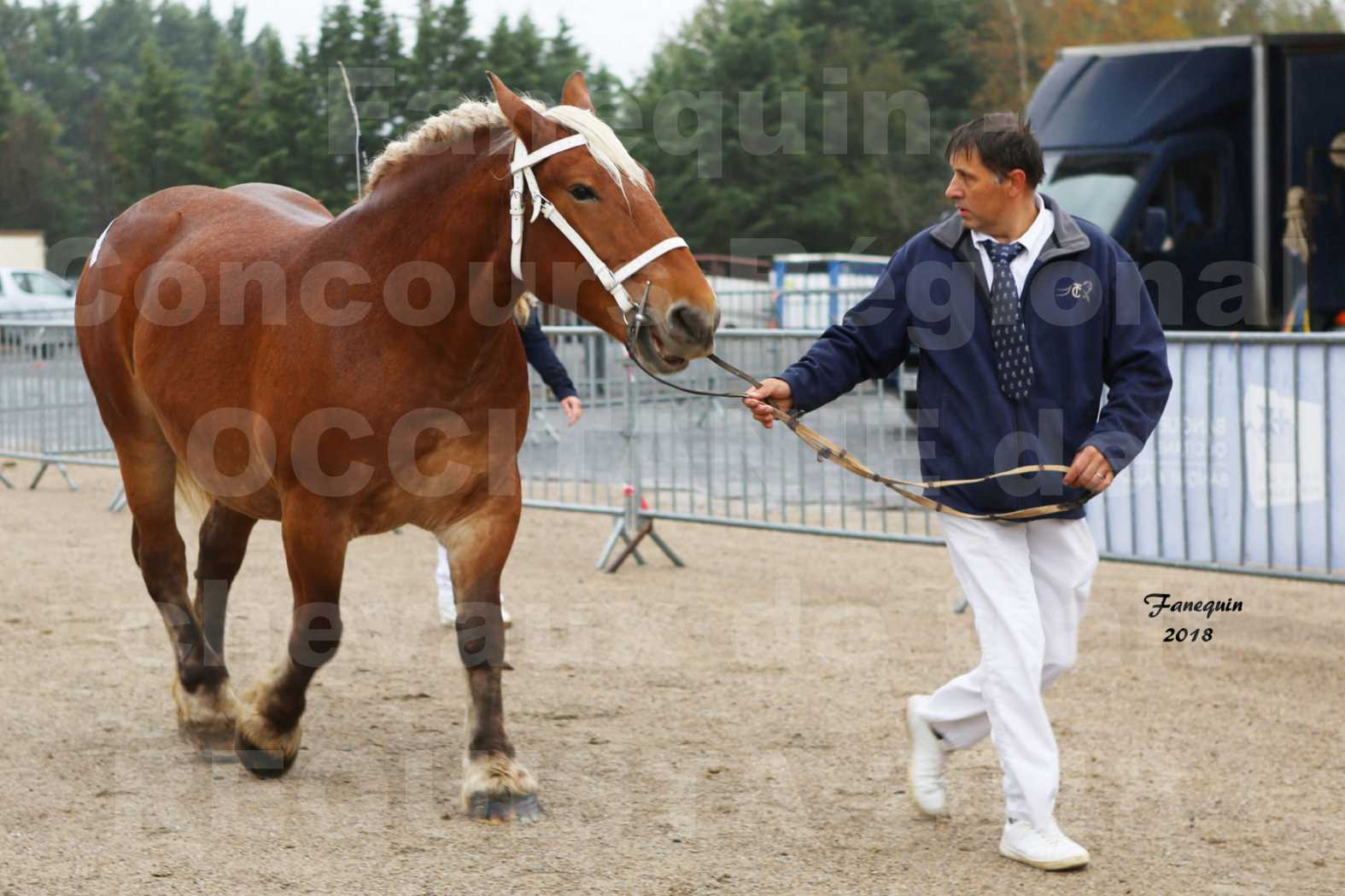 Concours Régional OCCITANIE de chevaux de traits à REQUISTA - DIANE DE GRILLOLES - 2