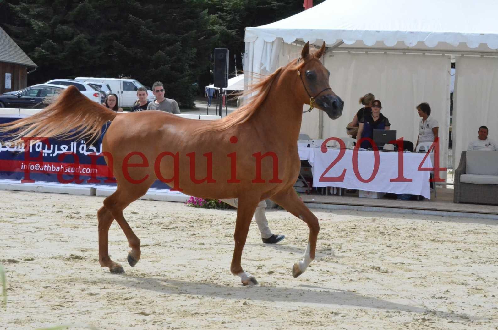 CHAMPIONNAT DE FRANCE 2014 A POMPADOUR - Championnat - LUTFINAH JA - 10