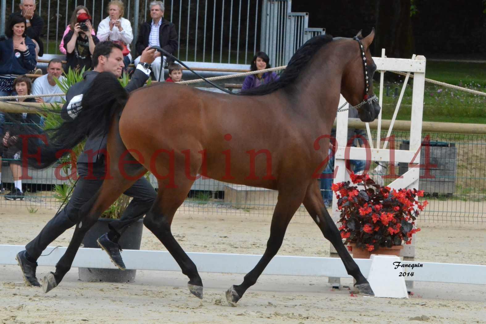 CHAMPIONNAT DE FRANCE 2014 A POMPADOUR - Notre Sélection - ABSOLUT DE DJOON - 02