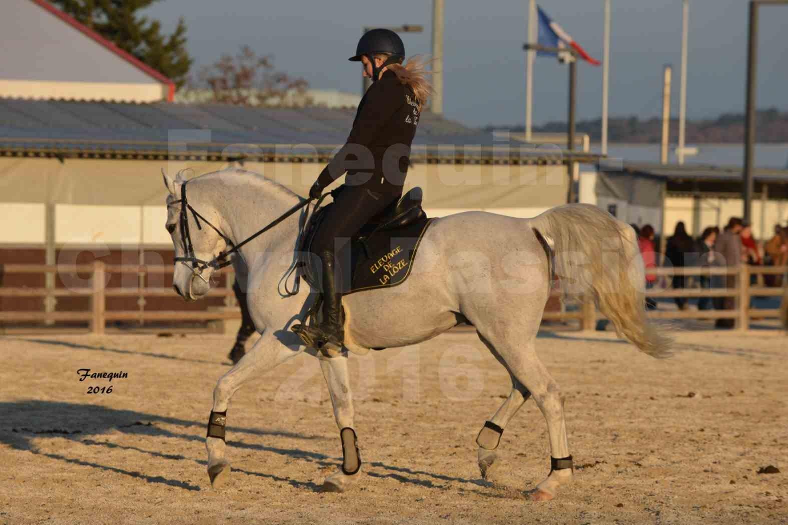 Cheval Passion 2016 - Présentation extérieure de chevaux Arabes montés - 21