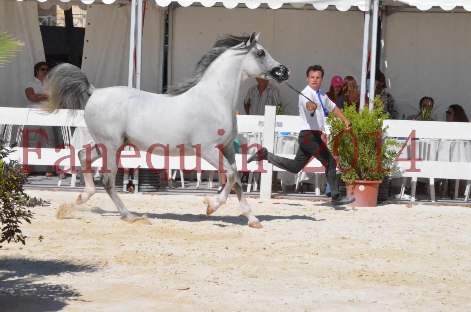 Concours National de Nîmes de chevaux ARABES 2014 - Sélection - SHAOLIN DE NEDJAIA - 03