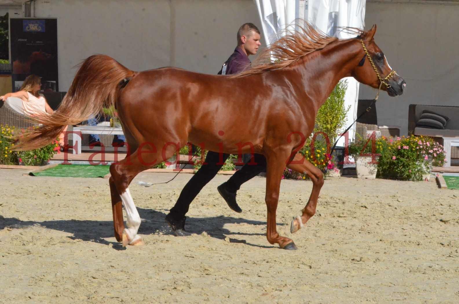 Championnat de FRANCE 2014 - Amateurs - SELECTO IBN SAMAWI - 043
