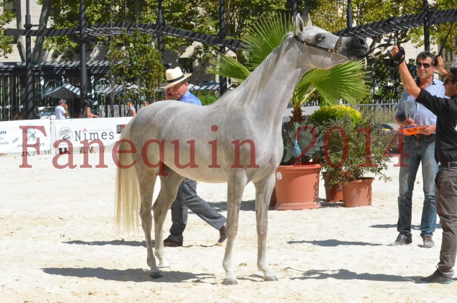 Concours national de Nîmes 2014 - Sélection  - VOLODIA DE LAFON - 27