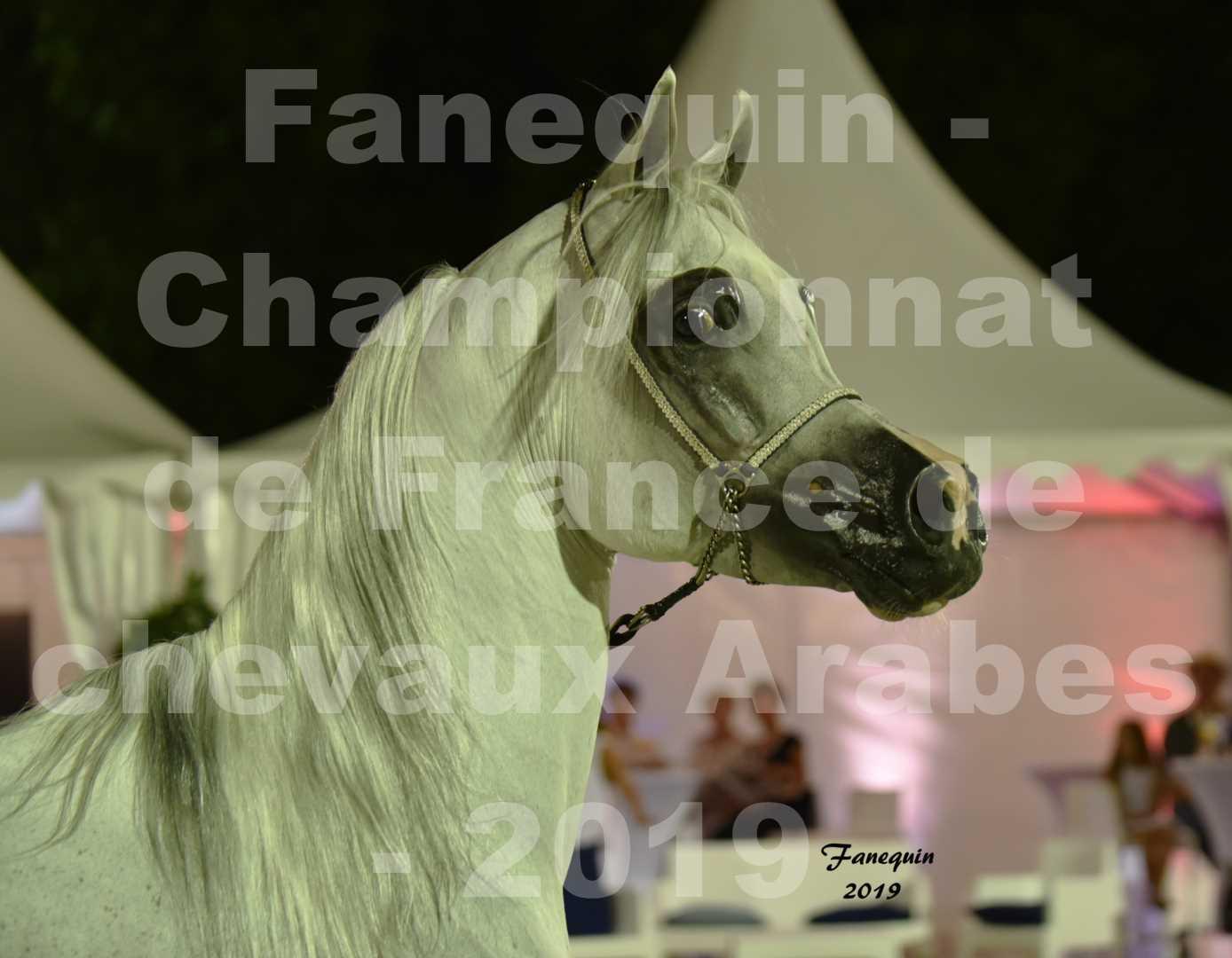 Championnat de France des chevaux Arabes en 2019 à VICHY - SHAMS EL ASHIRAF - Portraits - 1