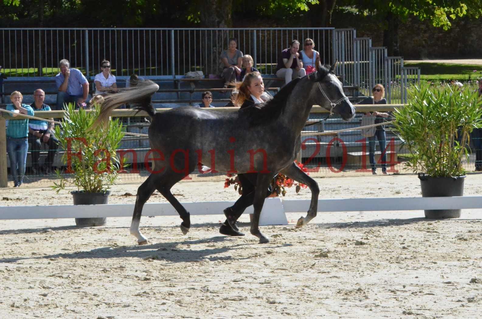 Championnat de FRANCE 2014 - Amateurs - CHTI KAID D'AUBIN - 10