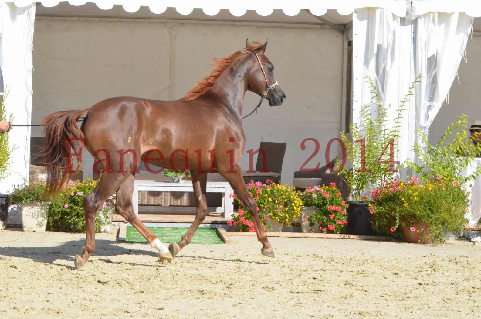 Championnat de FRANCE 2014 - Amateurs - LAMAL - 64