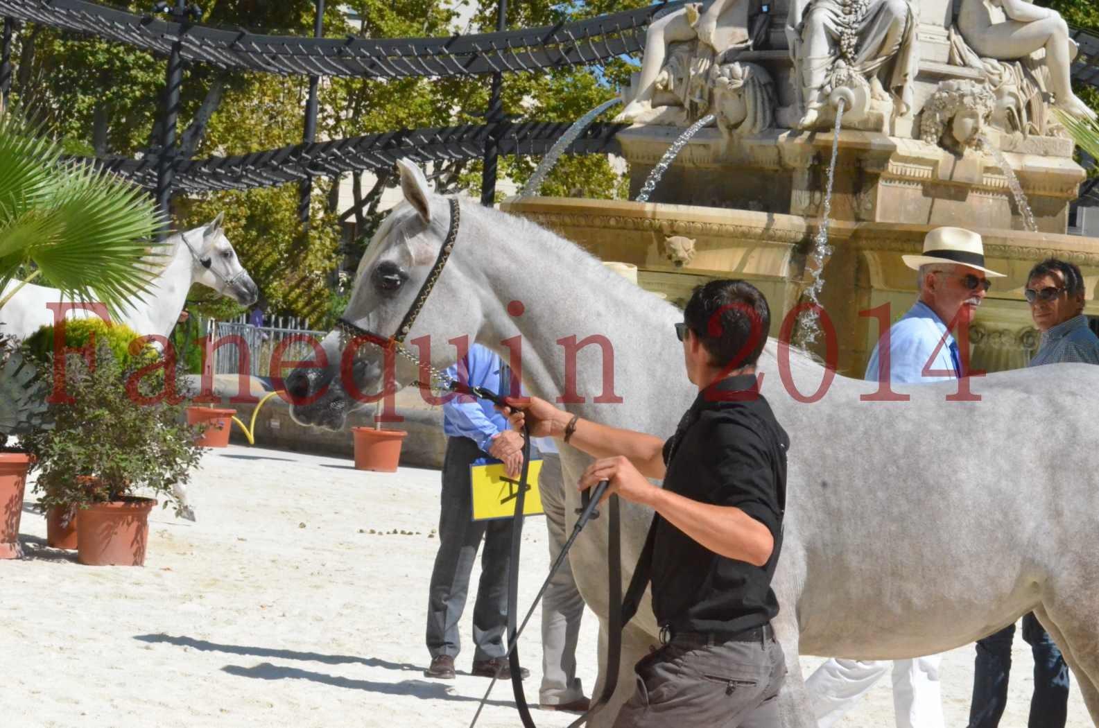 Concours national de Nîmes 2014 - Sélection - VOLODIA DE LAFON - 05