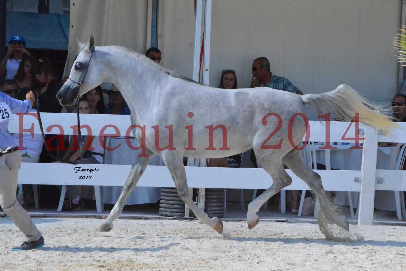 Concours National de Nîmes de chevaux ARABES 2014 - Notre Sélection - ELLESTERA - 01