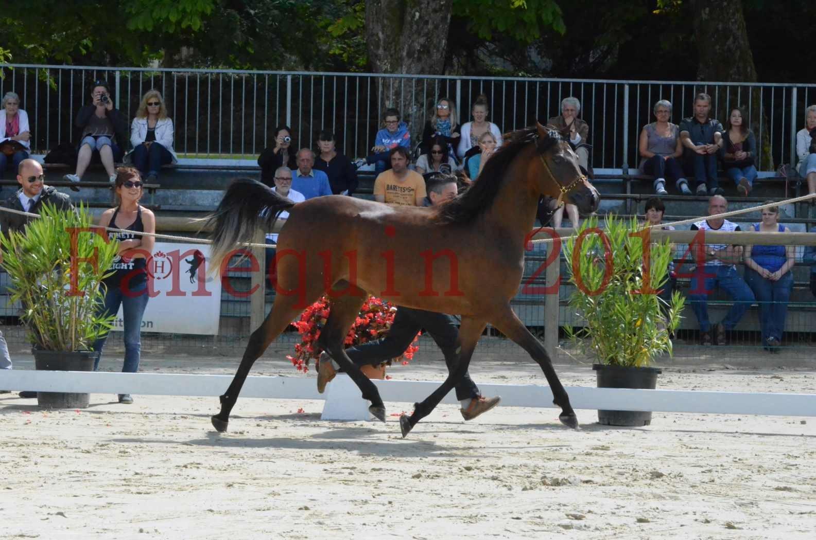Championnat de FRANCE 2014 - Amateurs - KAL'ELLE D'ELHORIA - 40