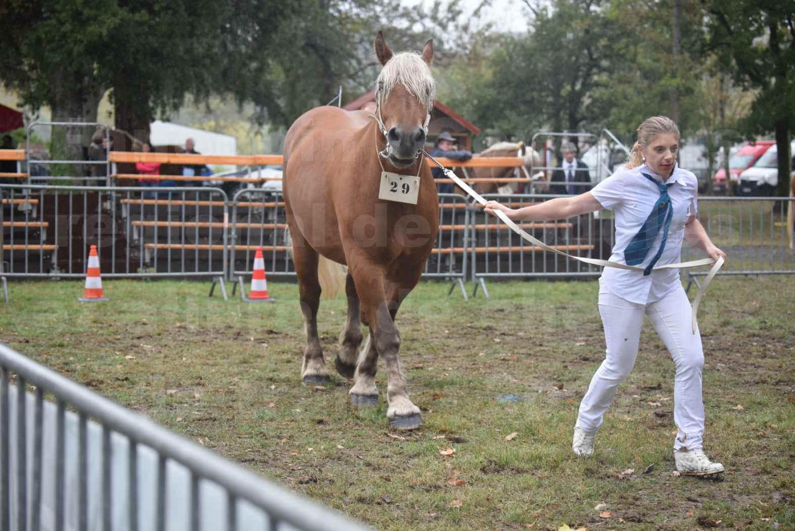 Concours Régional de chevaux de traits en 2017 - Trait COMTOIS - ELITE 14 - 24