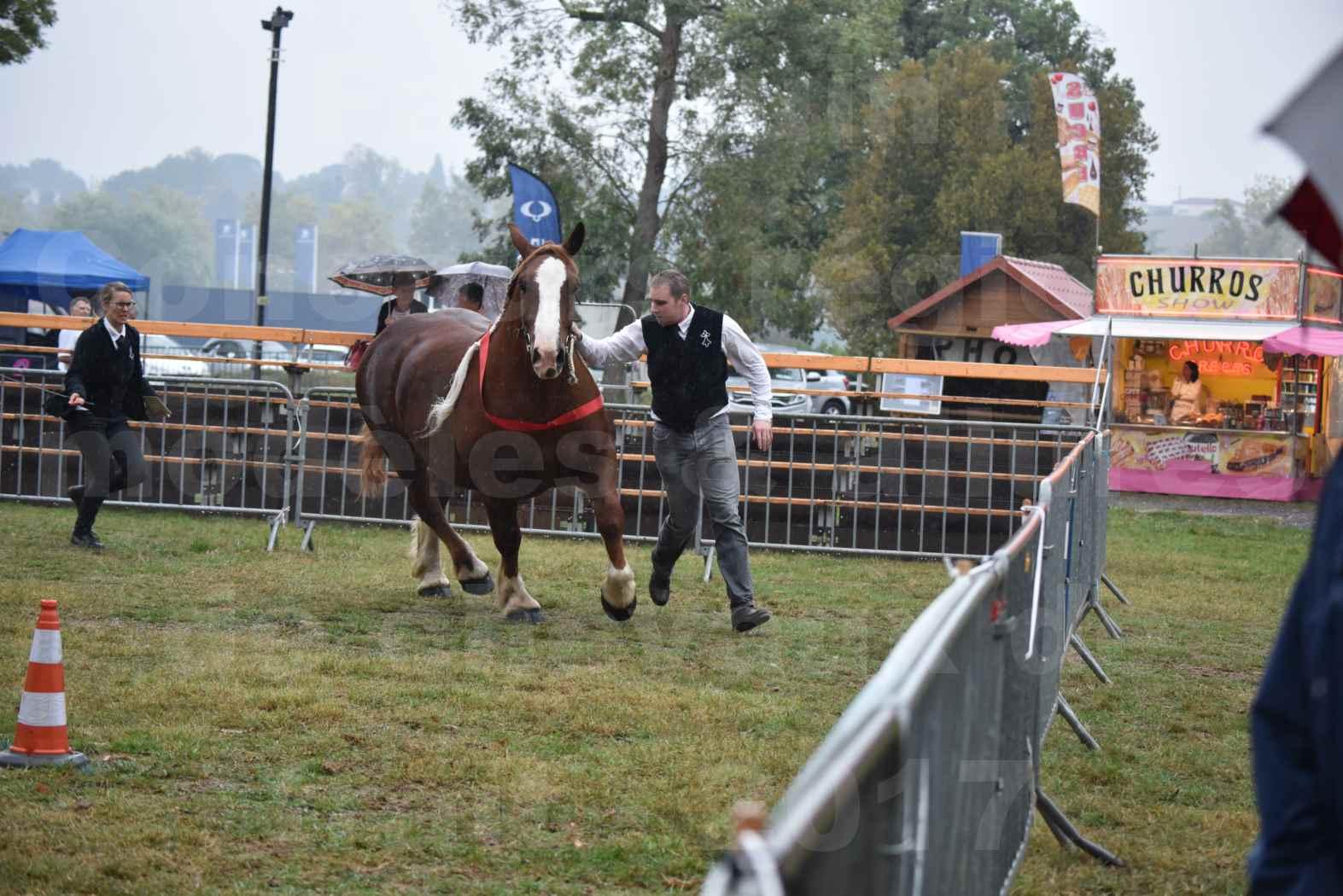 Concours Régional de chevaux de traits en 2017 - Pouliche trait BRETON - EDEN DE LA MOTTE - 36