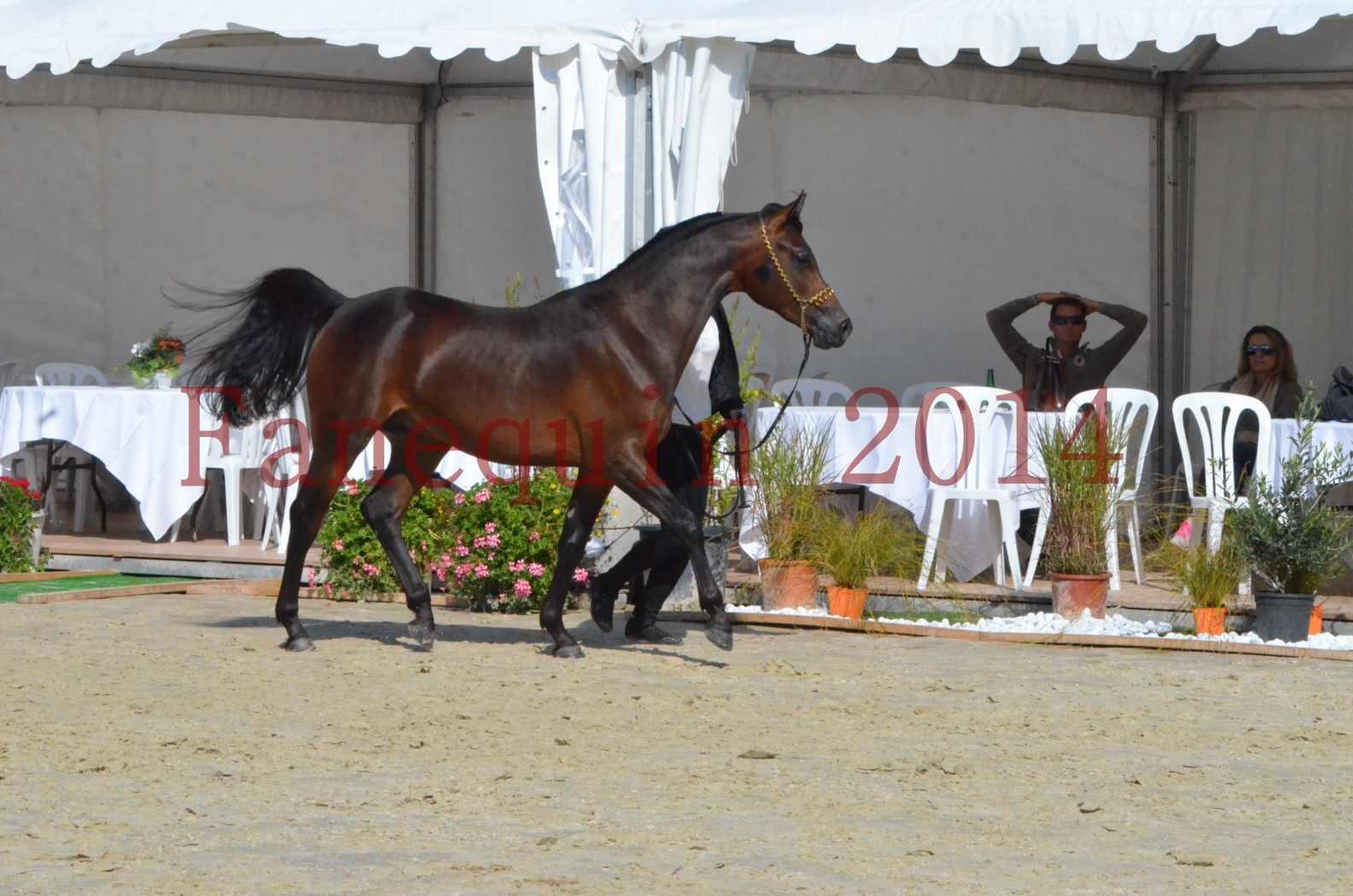 Championnat de FRANCE 2014 - Amateurs - JA KHALEB - 27