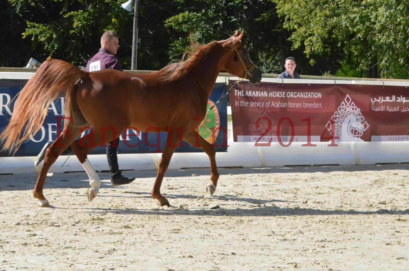Championnat de FRANCE 2014 - Amateurs - SELECTO IBN SAMAWI - 013
