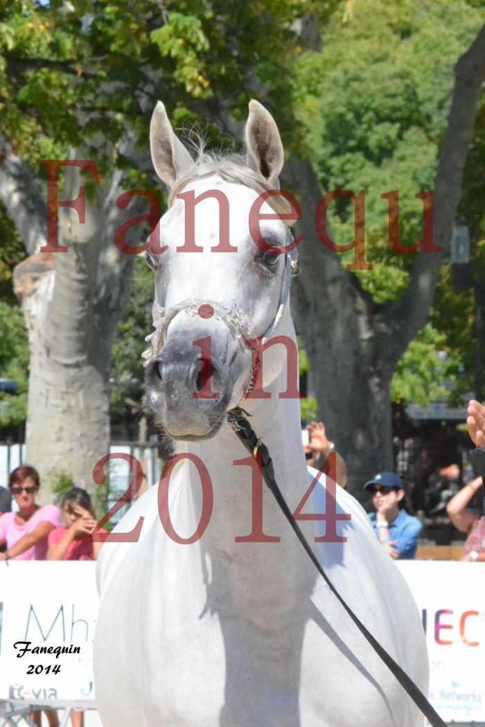 Concours National de Nîmes de chevaux ARABES 2014 - ENVY ETERNITY - 17