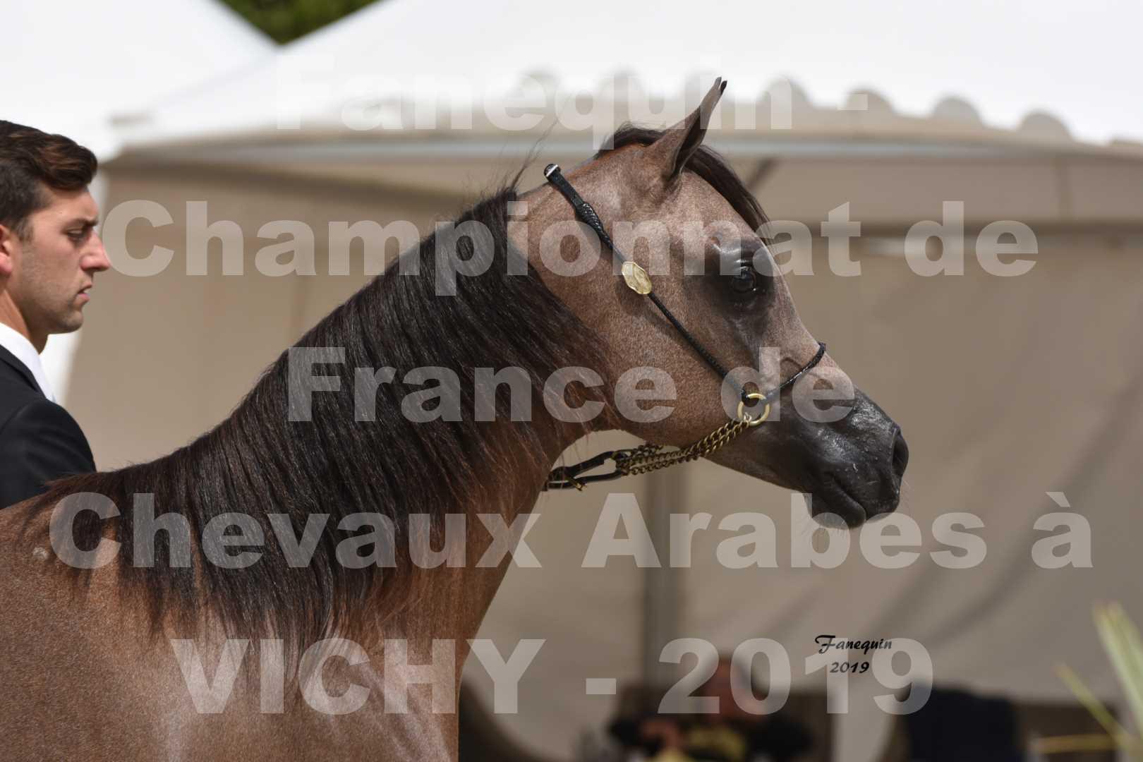 Championnat de France des chevaux Arabes en 2019 à VICHY - KENELM MISTRAL - 1