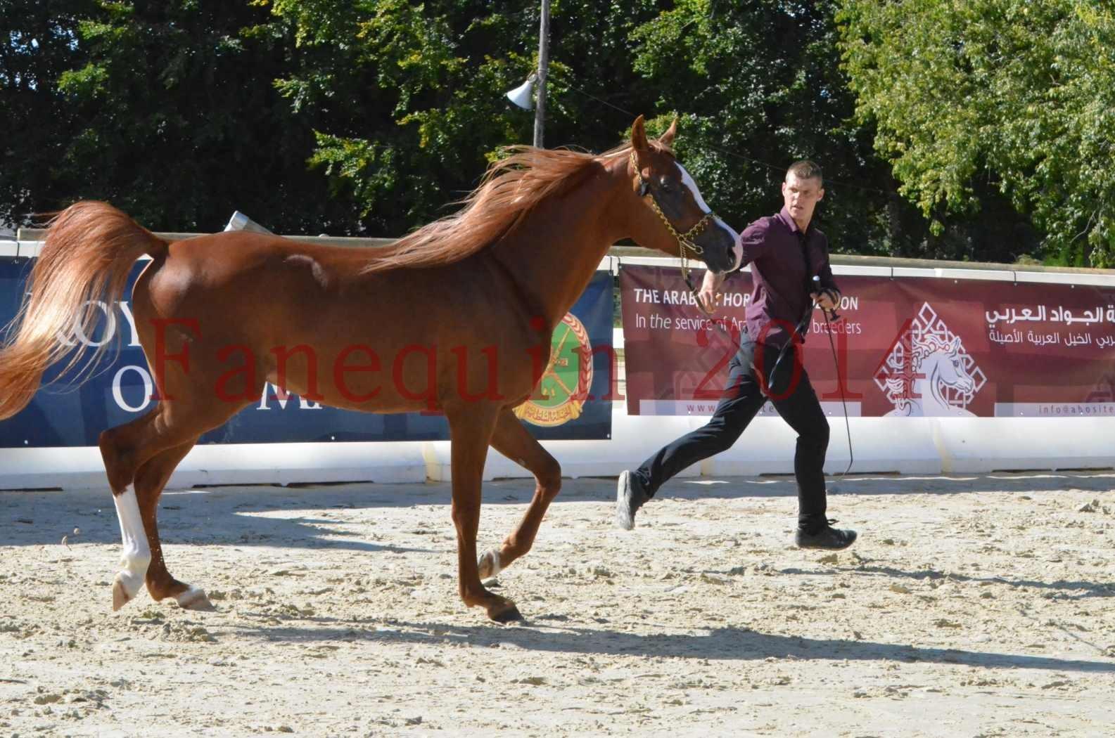 Championnat de FRANCE 2014 - Amateurs - SELECTO IBN SAMAWI - 034