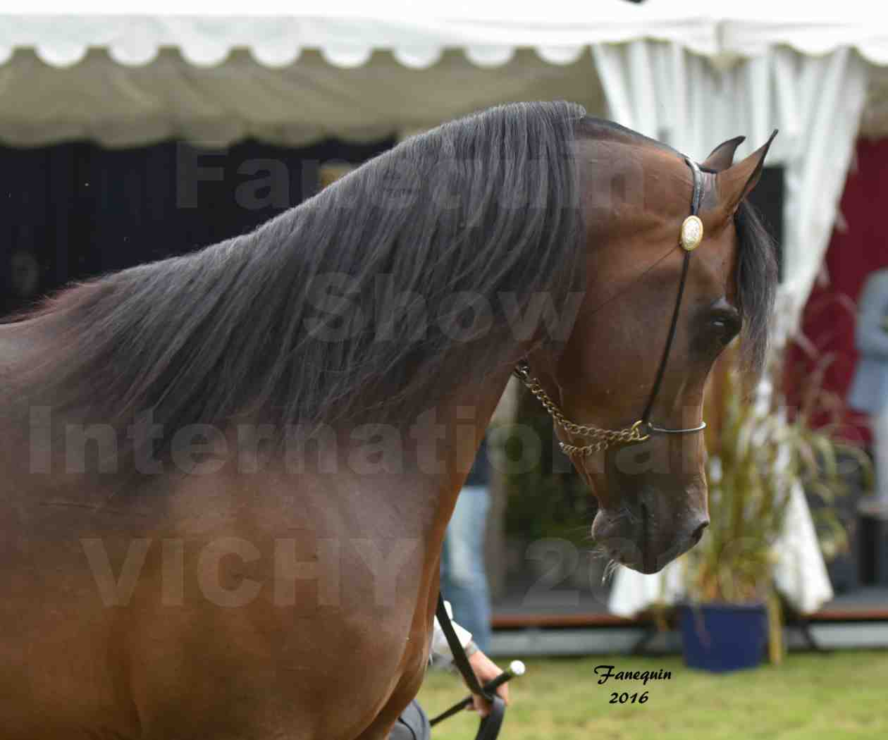 International Arabian Horse Show B de VICHY 2016 - MILLIAR - Notre Sélection - Portraits - 8