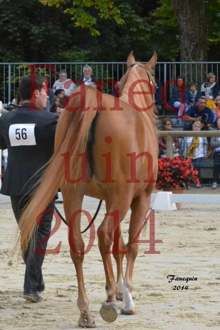 CHAMPIONNAT DE FRANCE 2014 A POMPADOUR - Notre Sélection - LUTFINAH JA - 06