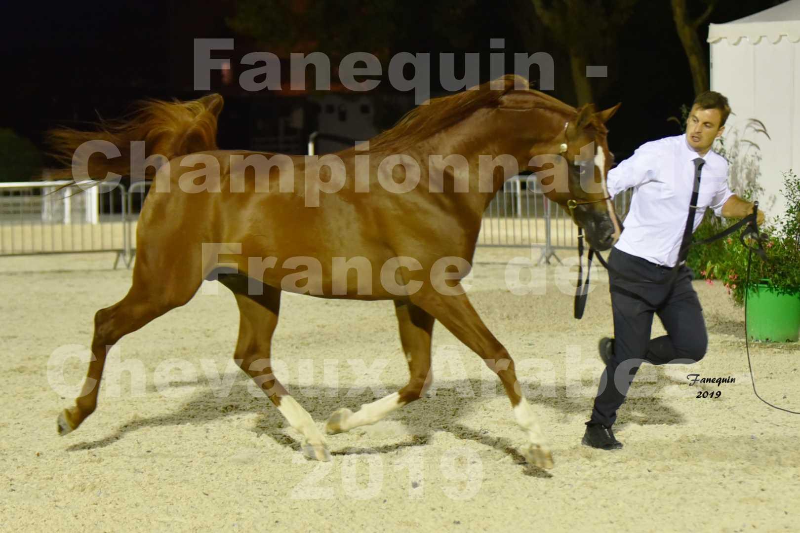 Championnat de France des chevaux Arabes en 2019 à VICHY - DZHARI NUNKI - 3