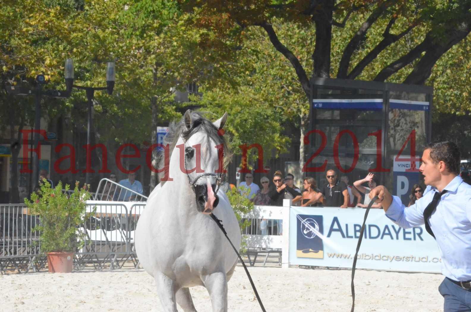 Concours National de Nîmes de chevaux ARABES 2014 - Championnat - SHAOLIN DE NEDJAIA - 27