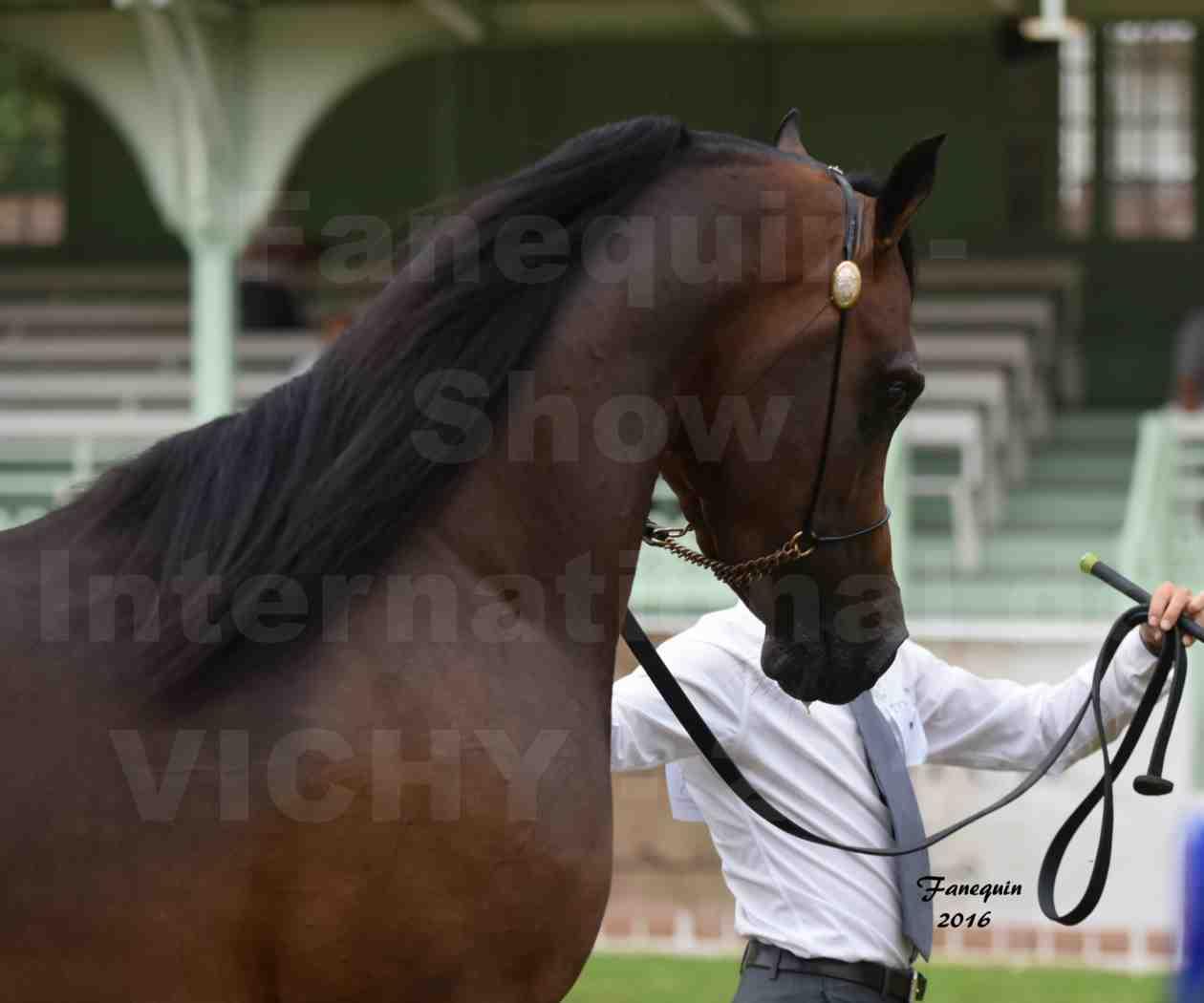 International Arabian Horse Show B de VICHY 2016 - MILLIAR - Notre Sélection - Portraits - 4