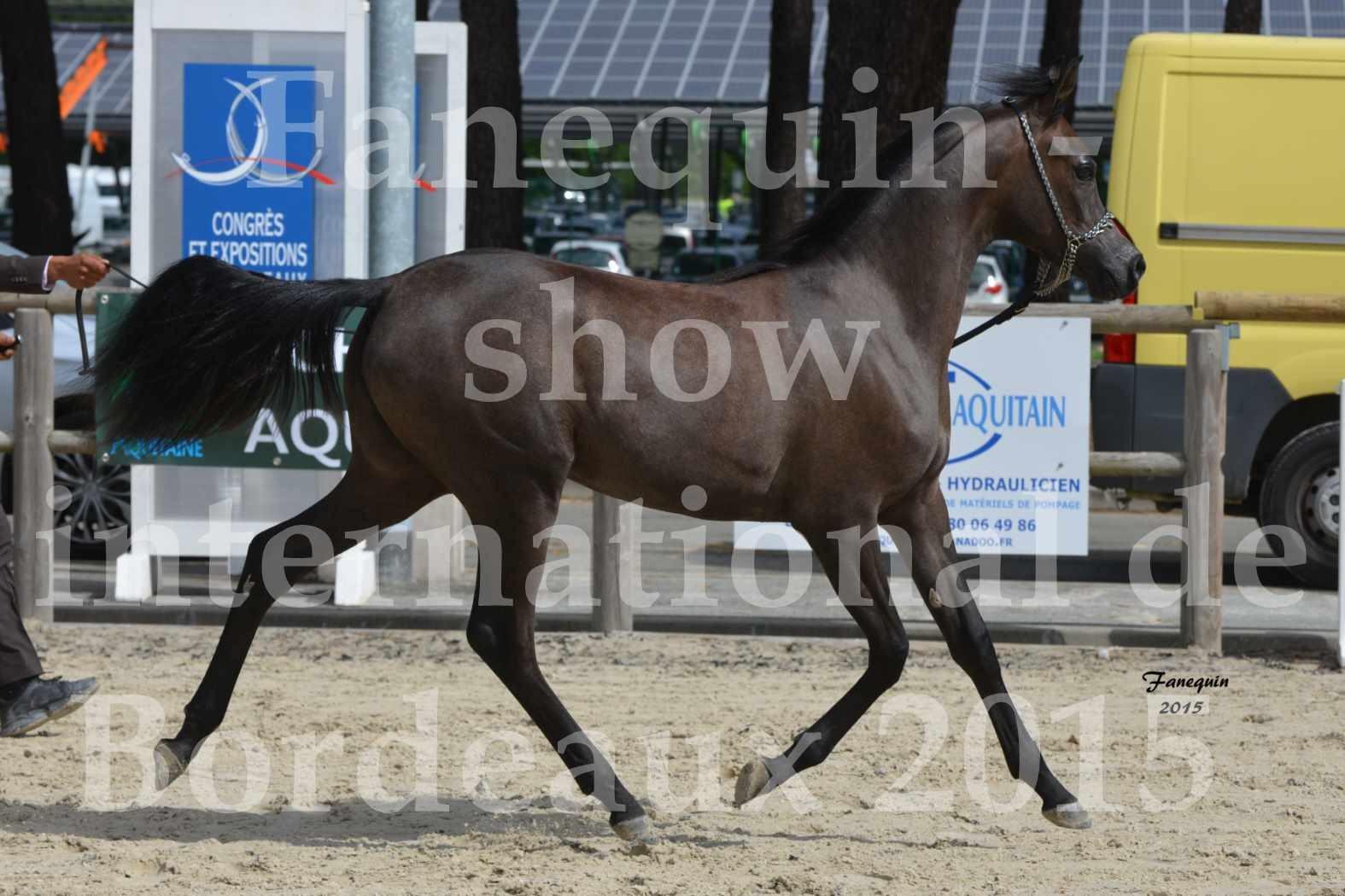 Salon Equitaine de Bordeaux 2015 - Show International de chevaux ARABES - 1